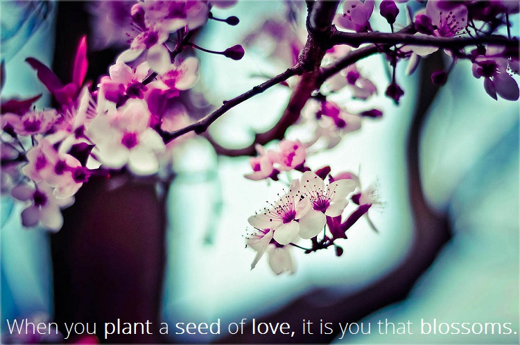 plant-seeds-of-love-quote-inner-path-spiritual-online-store